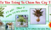Livestream Cay Trong Nuoc