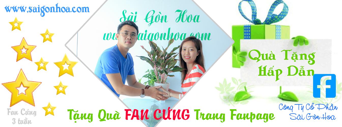 Tang Qua Fan Cung