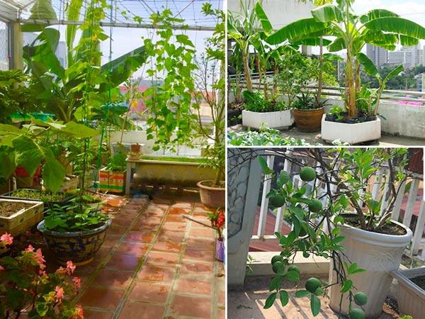 Sân thượng nhà phố ở Sài Gòn có trồng được cây ăn trái?