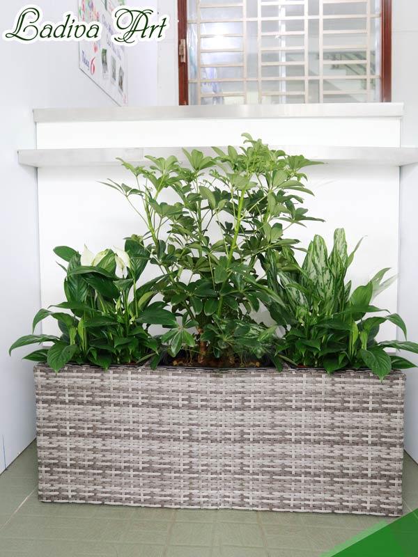 chậu trồng cây sợi mây LAP010