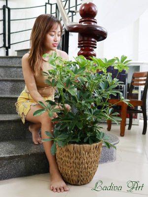 những mẫu chậu trồng cây hot nhất hiện nay