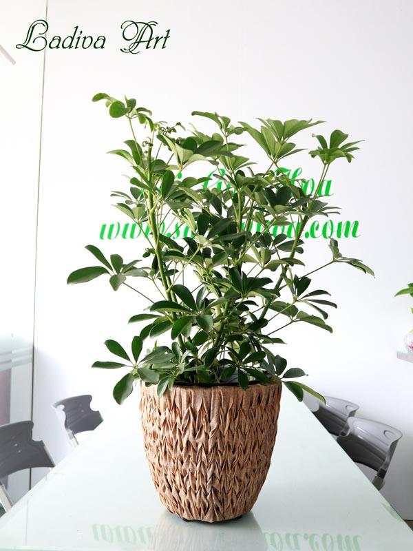chậu trồng cây sợi mây LAP007