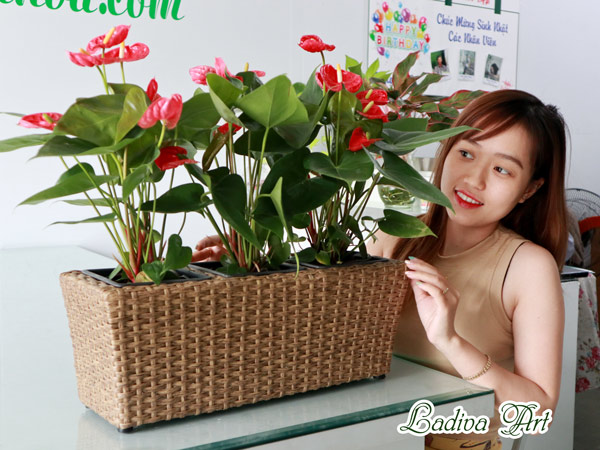Chau Trong Cay Soi May Lap009