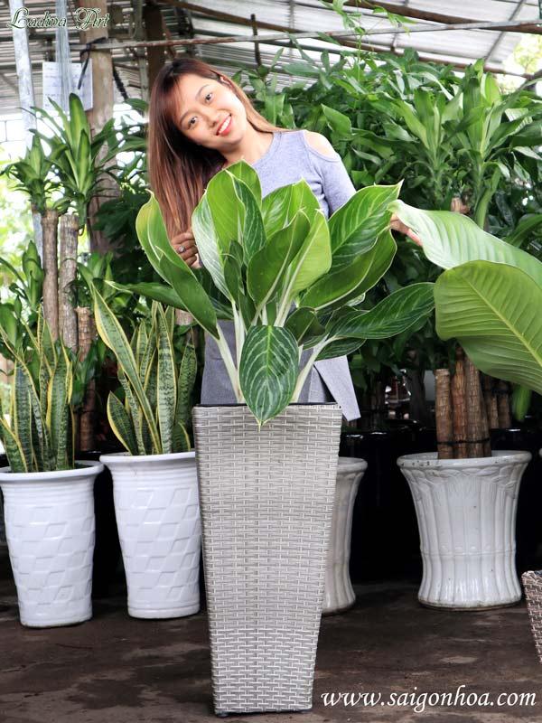 chậu trồng cây LAP001