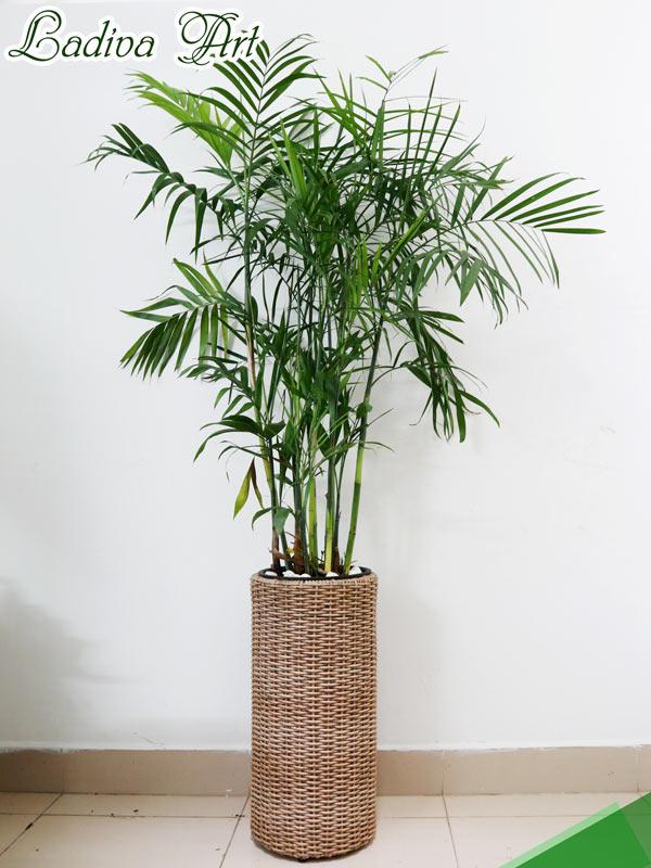 chậu trồng cây sợi mây LAP006