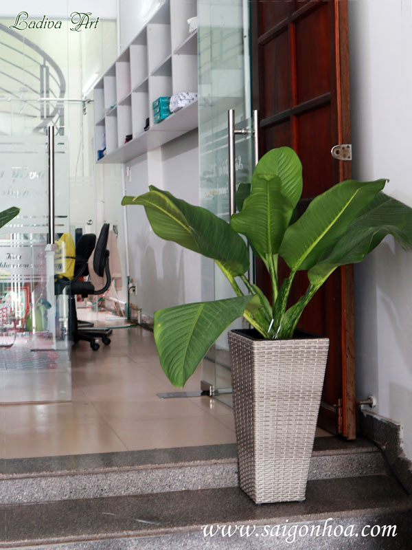 Lợi ích của việc trồng cây xanh trong văn phòng