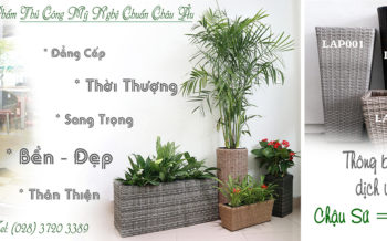 Chau Trong Dich Vu Cho Thue Cay