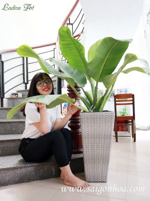 chậu trồng cây ladiva art