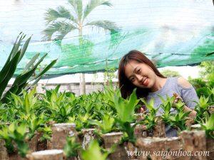 Vuon Uom Phat Tai 2