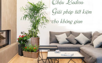 Cong Dung Chau Ladiva
