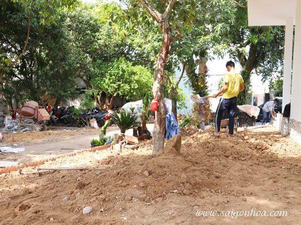 Làm đất tơi xốp để trồng cỏ