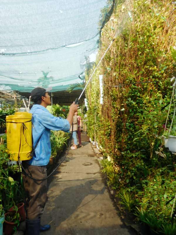 chăm sóc tường cây gừa