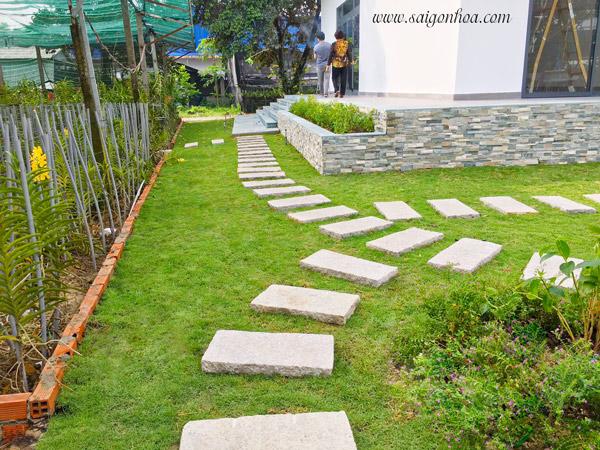 Trồng cỏ sân vườn tạo cảnh quan đẹp