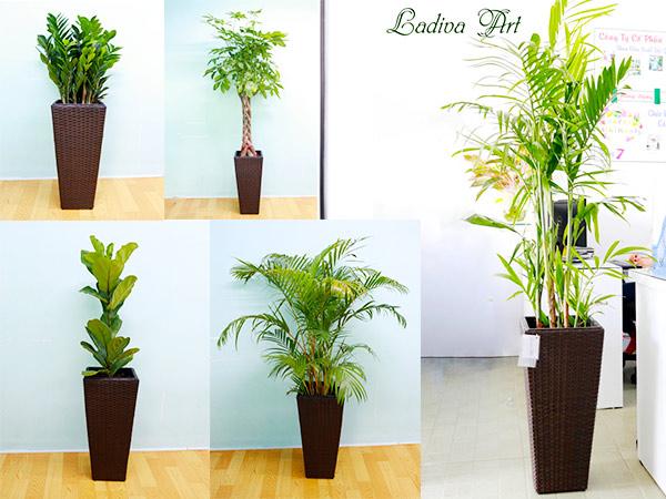 Ladiva - giải pháp tiết kiệm không gian