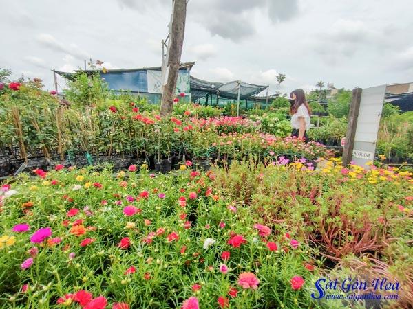 Vuon Cay Canh Thu Duc