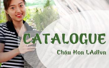 Catalogue Chau Hoa Ladiva