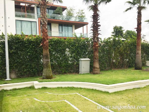 Tường cây gừa - mảng xanh cho không gian sống hiện đại