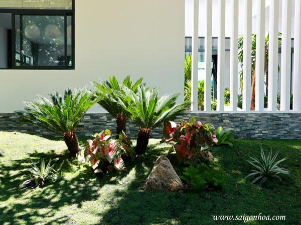 Thời điểm nào đưa cây xanh trồng vào sân vườn nhà xây mới