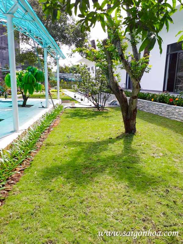 Biến sân vườn thành mảng xanh hút ánh nhìn