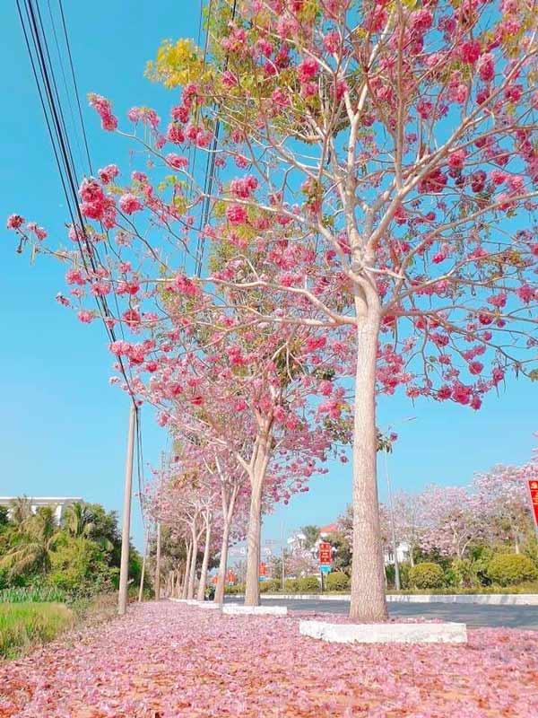 Cách tô điểm biệt thự nhà phố bằng cây bóng mát