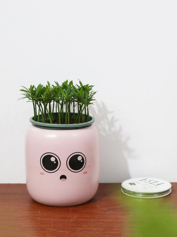 Chau Bom Mini Gom Su