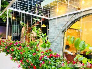 Cay Dừa Cạn Siêu Bông Quán Cà Phê