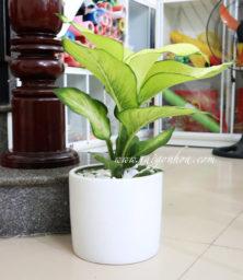 Chau Thien Hoang Chau Su