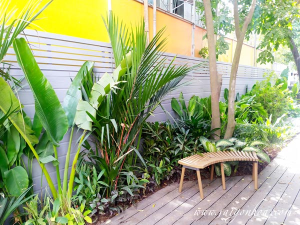 Chọn và trồng cây xanh phù hợp cho nhà phố