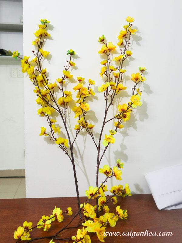 Canh Hoa Mai Bang Vai