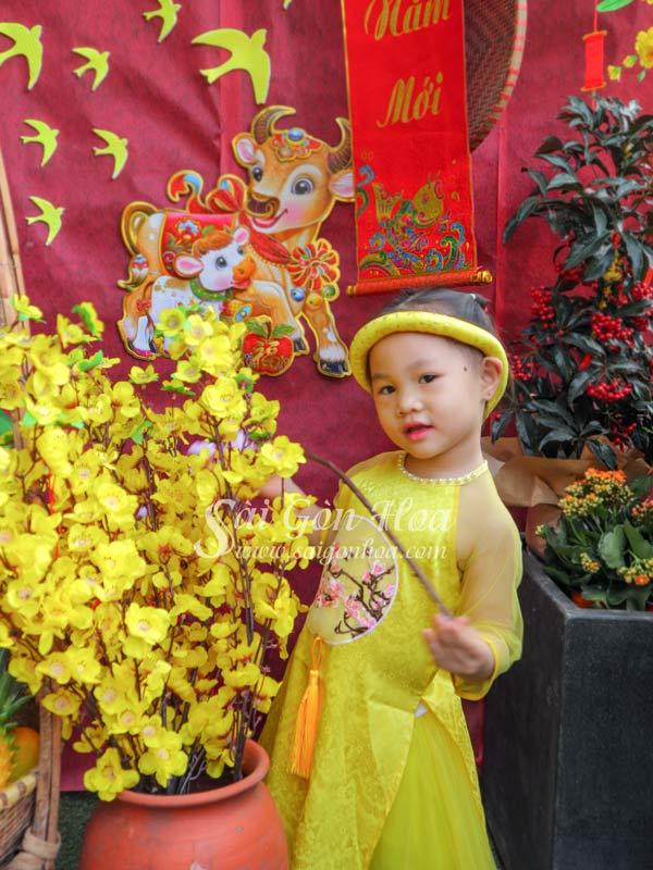 Canh Mai Dao Vai Trang Tri
