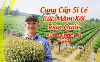 Dia Chi Ban Cuc Mam Xoi
