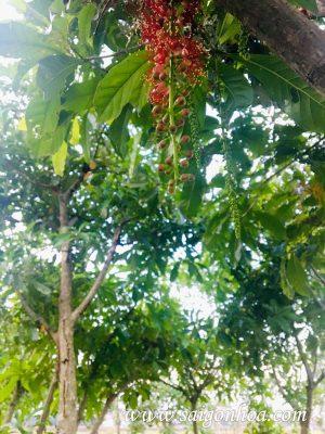 Hoa Cay Loc Vung
