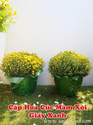 Hoa Cúc Mâm Xôi Giấy Xanh