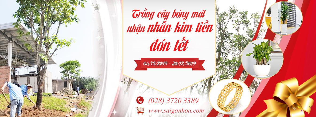 Trồng Cây Bóng Mát Nhận Nhẫn Kim Tiền Đón Tết Cùng Sài Gòn Hoa
