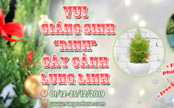 Vui Giang Sinh Rinh Cay Canh Lung Linh