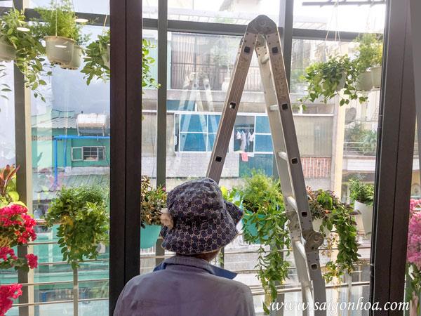 Chăm sóc hoa treo đúng cách cho ban công nhà phố
