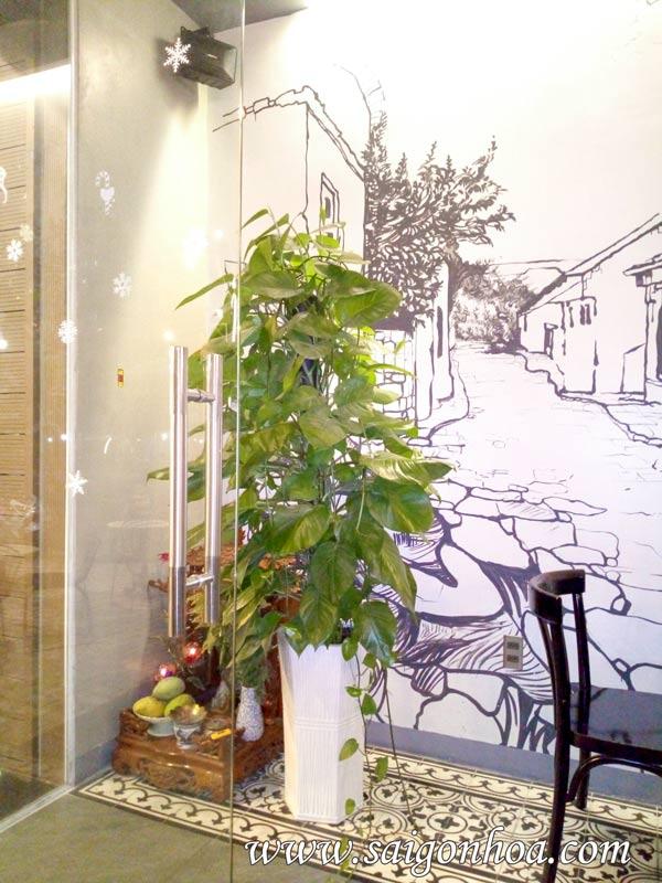 Bí kíp chăm sóc cây văn phòng tạo không gian xanh