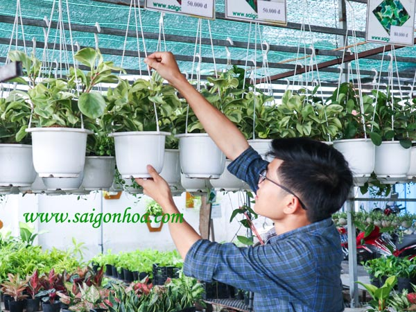 Cay Truong Sinh La Trang