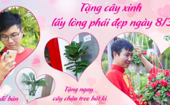 Cay Xinh Lay Long Phai Dep