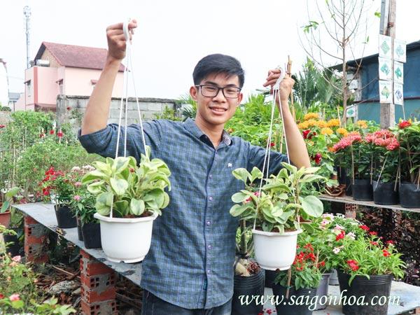 Mua Cay Truong Sinh Cam Thach