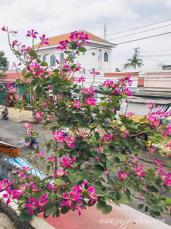 Cay Mong Bo Tim Biet Thu