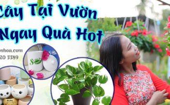 Mua Hàng Tại Vườn Rinh Ngay Quà Hot