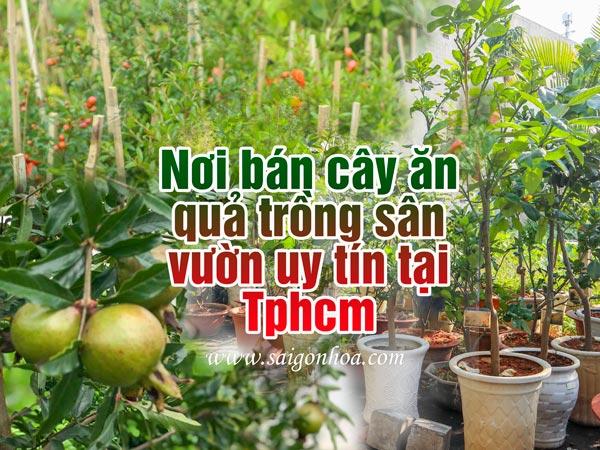 Noi Ban Cay An Qua Tphcm