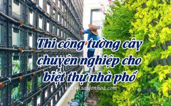 Thi Cong Tuong Cay Chuyen Nghiep