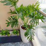 Những cách làm mới không gian với cây trong chậu