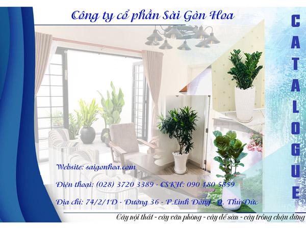 Catalogue Cay Noi That Cay De San