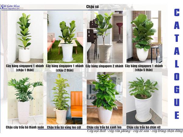 Catalogue Cay Noi That Chau Su 2