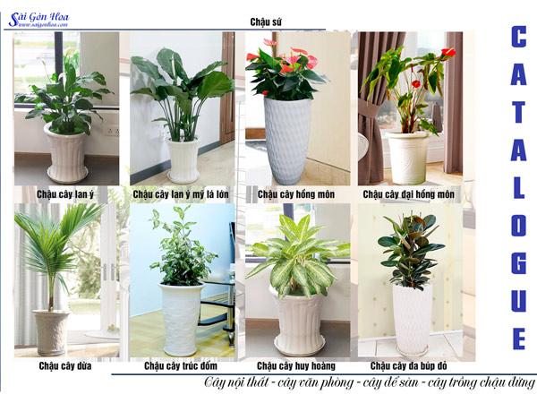 Catalogue Cay Noi That Chau Su 4
