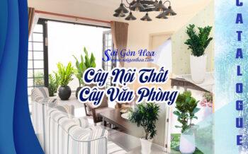 Catalogue Cay Noi That Van Phong
