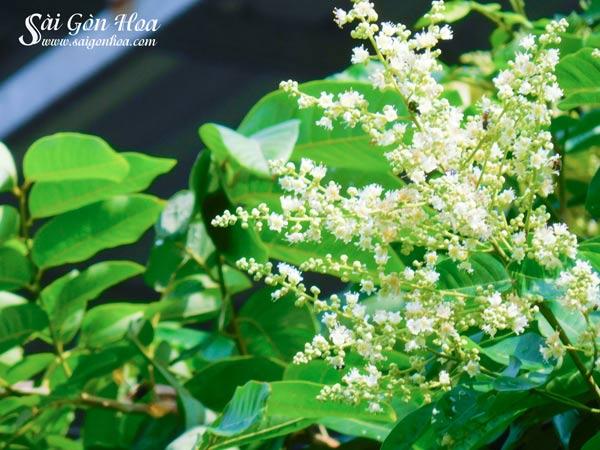 Hoa Cay Nhan